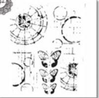 Šablona TCW -  Specimen