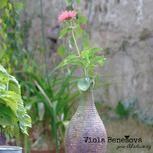 Nový trend: Mechová váza